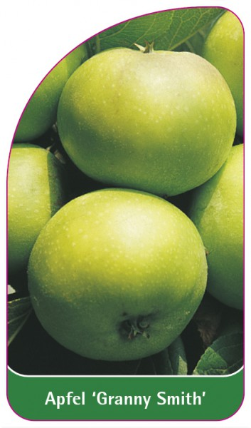 Apfel 'Granny Smith', 68 x 120 mm