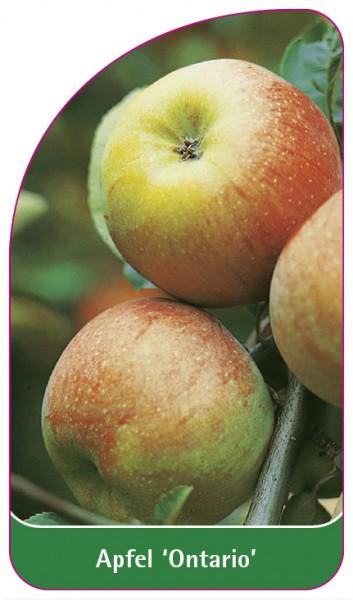Apfel 'Ontario', 68 x 120 mm