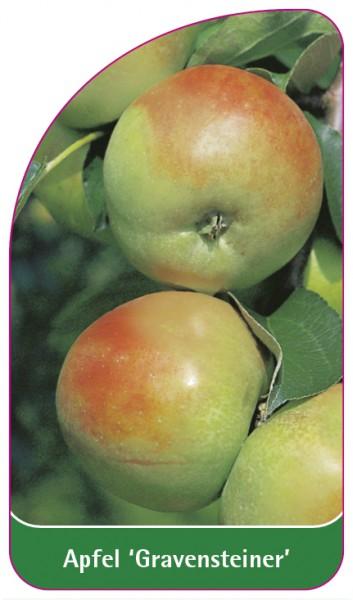 Apfel 'Gravensteiner', 68 x 120 mm