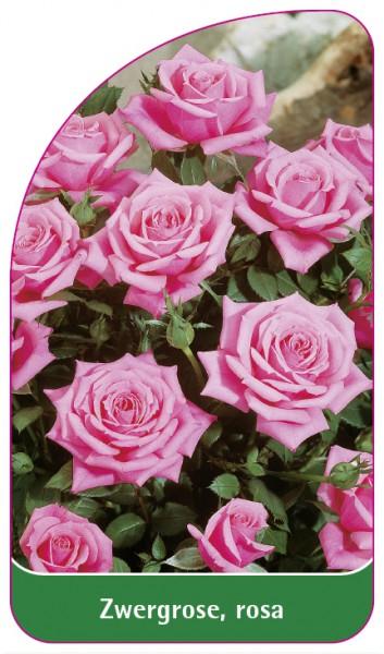 Zwergrose, rosa, 68 x 120 mm