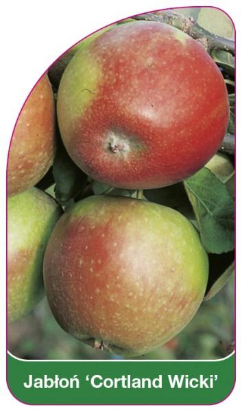 Jabłoń 'Cortland Wicki', 68 x 120 mm