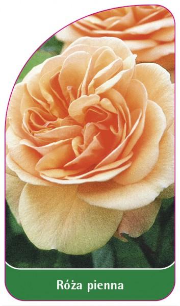 Róza pienna Nr. 59, 68 x 120 mm