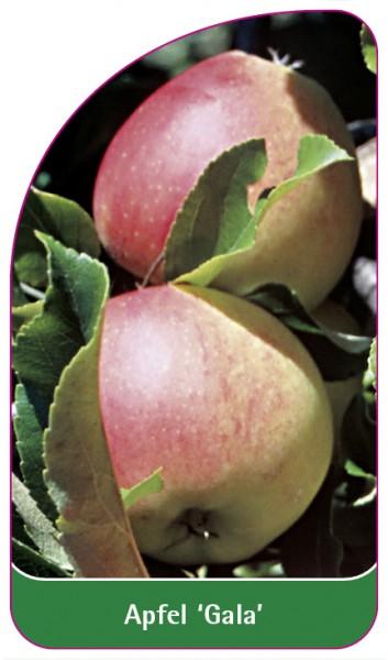 Apfel 'Gala', 68 x 120 mm