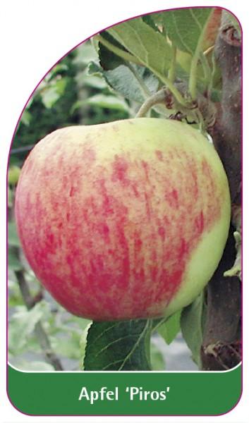 Apfel 'Piros', 68 x 120 mm