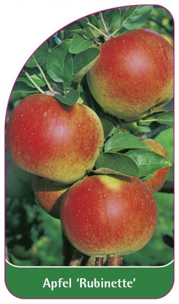 Apfel 'Rubinette', 68 x 120 mm