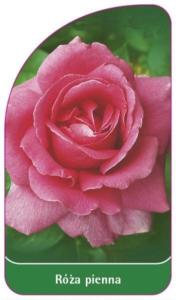 Róza pienna Nr. 2, 68 x 120 mm