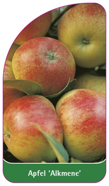 Apfel 'Alkmene', 68 x 120 mm