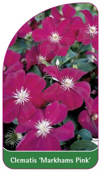 Clematis 'Markhams Pink', 68 x 120 mm