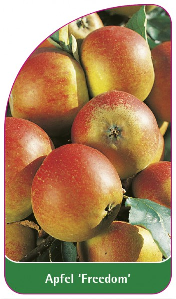 Apfel 'Freedom', 68 x 120 mm