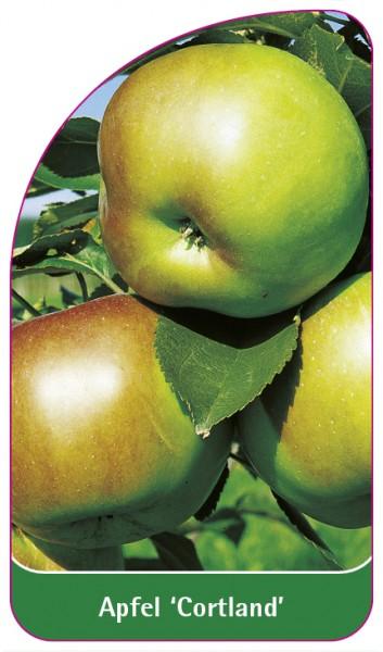 Apfel 'Cortland', 68 x 120 mm