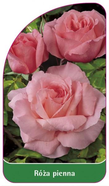 Róza pienna Nr. 32, 68 x 120 mm