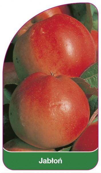 Jabłoń, 68 x 120 mm