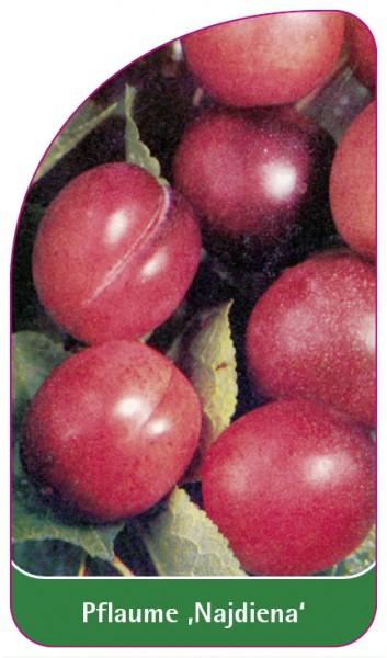 Pflaume 'Najdiena', 68 x 120 mm