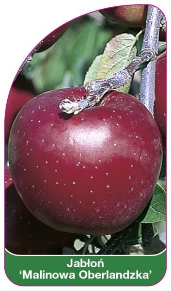 Jabłoń 'Malinowa Oberlandzka', 68 x 120 mm