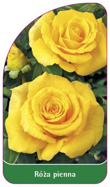 Róza pienna Nr. 45, 68 x 120 mm