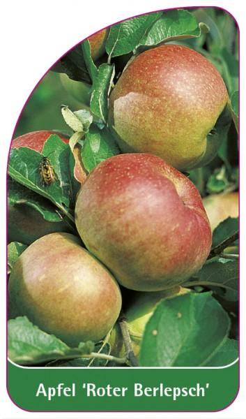 Apfel 'Roter Berlepsch', 68 x 120 mm