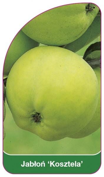 Jabłoń 'Kosztela', 68 x 120 mm