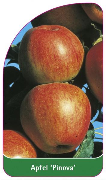 Apfel 'Pinova', 68 x 120 mm