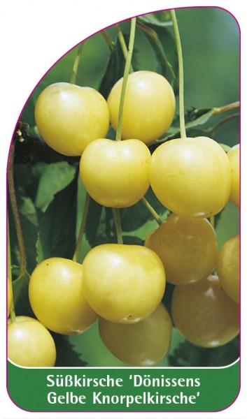 Süßkirsche 'Dönissens Gelbe Knorpelkirsche', 68 x 120 mm