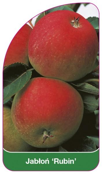 Jabłoń 'Rubin', 68 x 120 mm