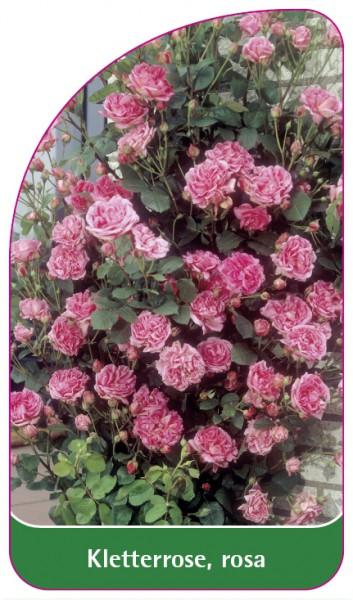 Kletterrose, rosa, 68 x 120 mm