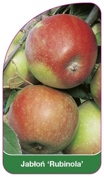 Jabłoń 'Rubinola', 68 x 120 mm