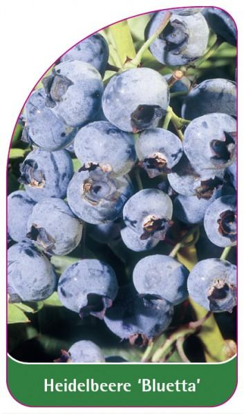 Heidelbeere 'Bluetta', 68 x 120 mm