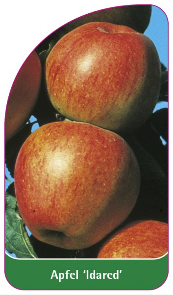 Apfel 'Idared', 68 x 120 mm