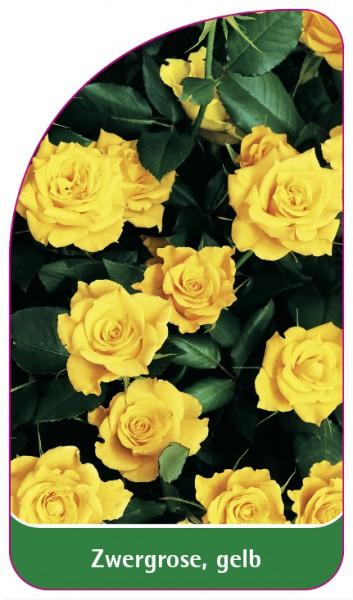 Zwergrose, gelb, 68 x 120 mm