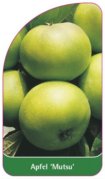 Apfel 'Mutsu', 68 x 120 mm