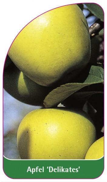 Apfel 'Delikates', 68 x 120 mm