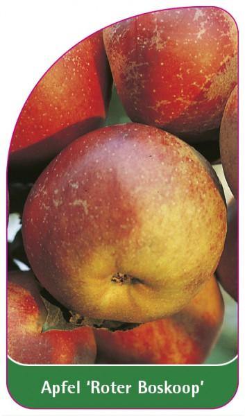 Apfel 'Roter Boskoop', 68 x 120 mm