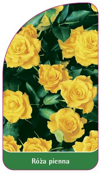 Róza pienna Nr. 76, 68 x 120 mm