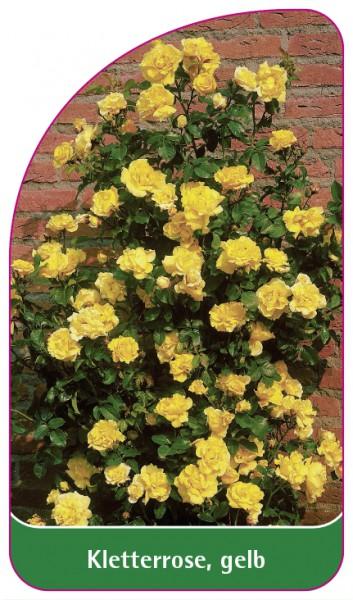 Kletterrose, gelb, 68 x 120 mm