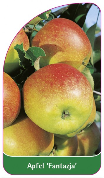 Apfel 'Fantazja', 68 x 120 mm