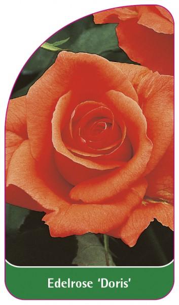 Edelrose 'Doris', 68 x 120 mm