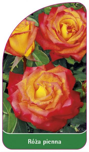Róza pienna Nr. 23, 68 x 120 mm