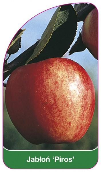 Jabłoń 'Piros', 68 x 120 mm
