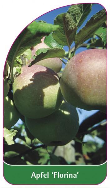 Apfel 'Florina', 68 x 120 mm