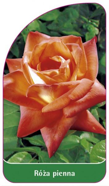 Róza pienna Nr. 25, 68 x 120 mm