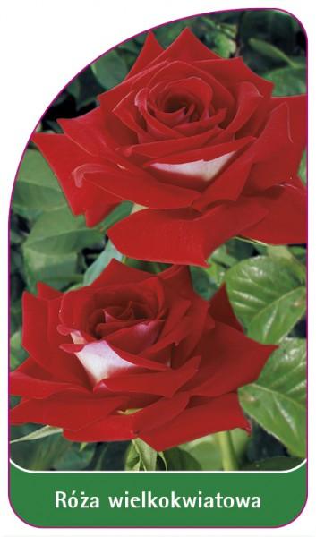 Róza wielkokwiatowa Nr. 227, 68 x 120 mm PL