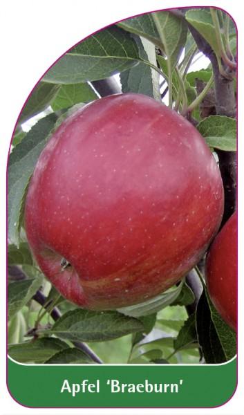 Apfel 'Braeburn', 68 x 120 mm