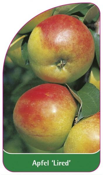 Apfel 'Lired', 68 x 120 mm