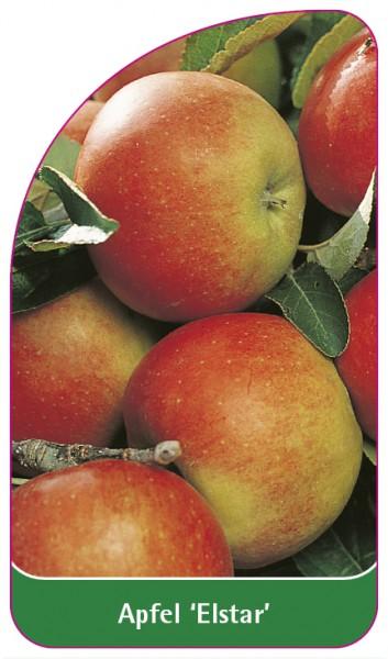 Apfel 'Elstar', 68 x 120 mm