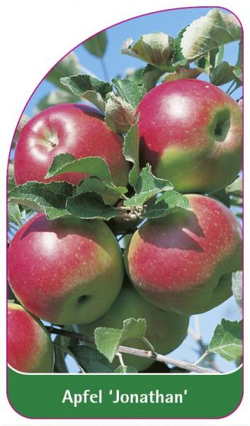 Apfel 'Jonathan', 68 x 120 mm