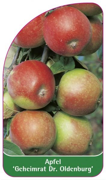 Apfel 'Geheimrat Dr. Oldenburg', 68 x 120 mm