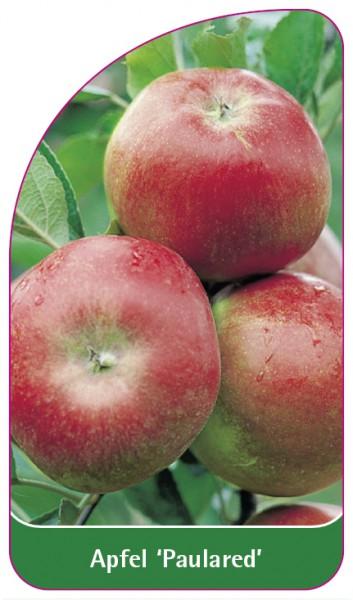 Apfel 'Paulared', 68 x 120 mm