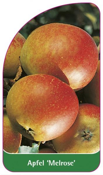 Apfel 'Melrose', 68 x 120 mm