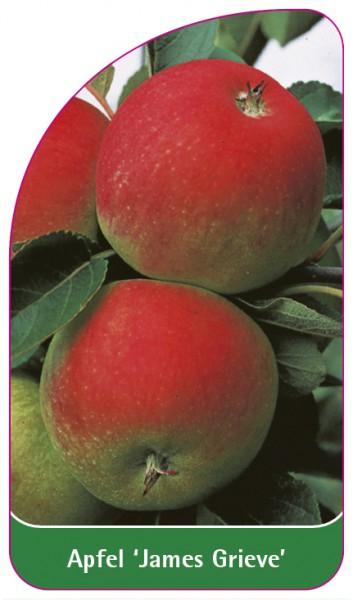 Apfel 'James Grieve', 68 x 120 mm
