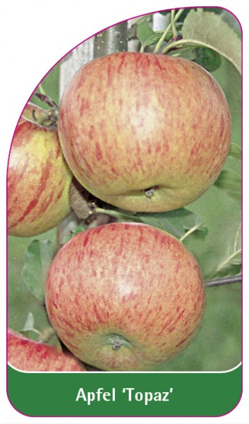 Apfel 'Topaz', 68 x 120 mm